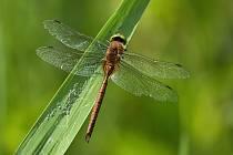 Fascinující výjevy ze světa hmyzu.