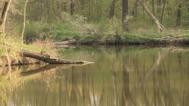 Krásná přírodní scenérie u břehu řeky Moravy.