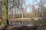 Lesy České republiky obnovily mokřad a několik tůní na potoce Olšička v lesích na Hodonínsku. Foto v roce 2021.