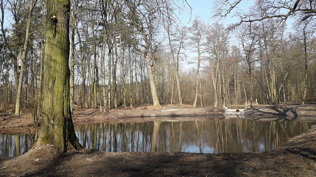 Obnovený mokřad a několik tůní na potoce Olšička v lesích na Hodonínsku.