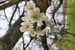 Jaro je nejkrásnější a nejbarevnější roční období. Vše pučí, kvete a voní.