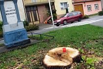 Pokácené stromy v Miloticích.