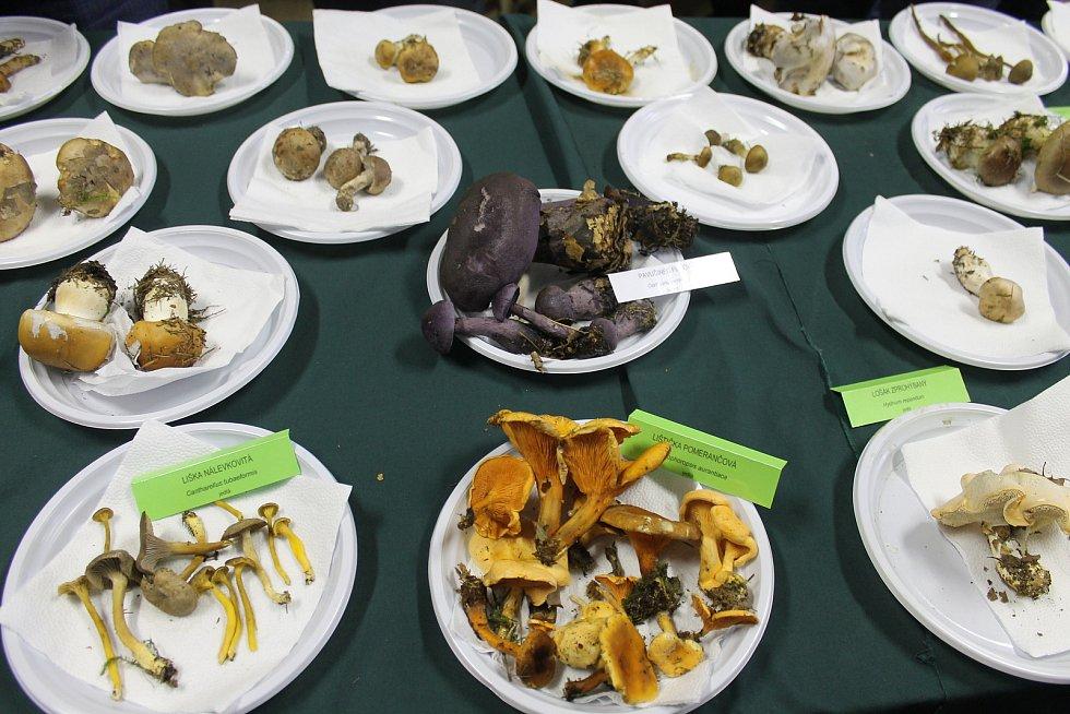 Výstava hub v Ratíškovicích.