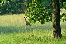 Jarní příroda nabízí úžasný odpočinek.