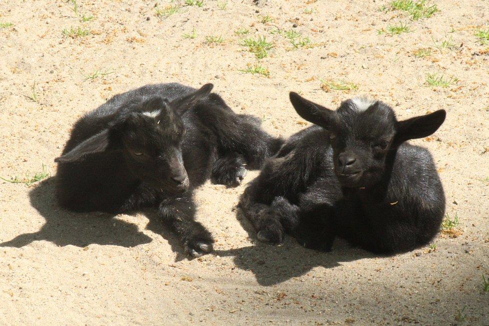 Lidé si mohou po znovuotevření zoologické zahrady prohlédnout zvířata ve venkovních výbězích či voliérách.
