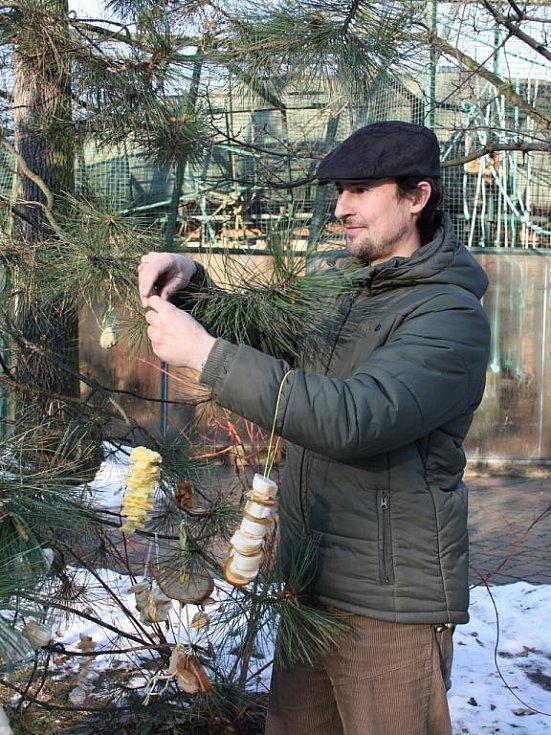 Vánoce slaví i hodnínská zoo. Děti z kroužku Sovičky, který při zoo funguje, připravily pro opice dárečky. Ty si je otevřou na Boží hod.