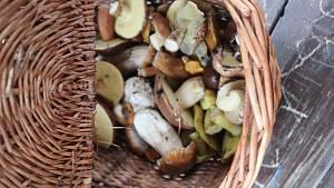 Na houbách s Václavem Koplíkem v lesích ratíškovické Dúbravy