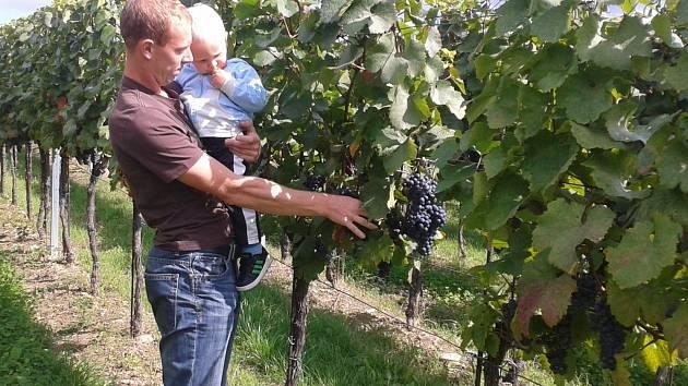 Kvalitní surovina. To je podle vinaře Jana Cíchy z Blatnice základní předpoklad pro výrobu kvalitního vína. I když zkouší některé nové odrůdy révy vinné, při práci raději volí ověřené postupy.