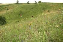 Čejkiovické Špidláky – chráněná flóra. Ilustrační foto