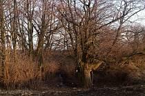 Lidé z Blatnice pod Svatým Antonínkem nechtějí, aby místo, kde v minulosti byla obec Smíchov, upadlo v zapomnění. Místo chtějí vyčistit od křoví a stromů a postavit na něm informační tabuli.