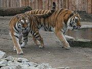 Guerezy v hodonínské zoo
