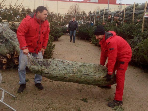Se začátkem prosince se začínají všichni poohlížet po jednom z neodmyslitelných symbolů nastávajících svátků - vánočním stromu. Letos zatím prodeji vévodí jedle.