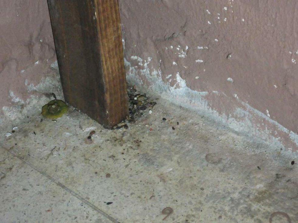 Myší trus našli inspektoři na mnoha místech v Čiči baru ve Vracově. Provozovnu uzavřeli.