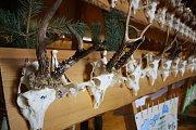 Chovatelská přehlídka trofejí zvěře ulovené v hodonínském okresu za poslední sezonu.