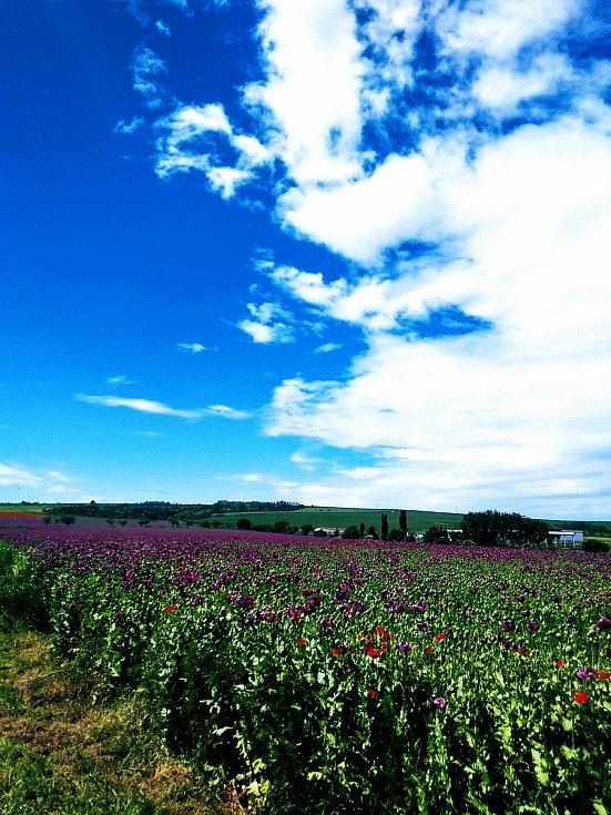 Léto je pro některé nejkrásnějším obdobím celého roku.