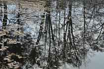 Podzimní příroda v okolí Třemešských rybníků.