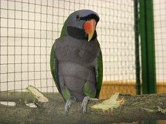Výstava exotického ptactva v Kněždubu.