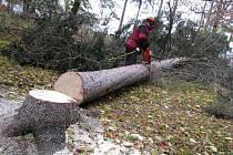Stromy v parku je třeba vyměnit.