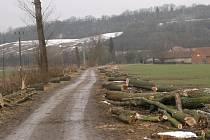 Pokácené stromy v Doubravici nad Svitavou.