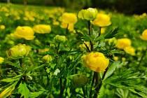 Za jarními květy Mioravského krasu.