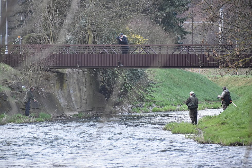 V pátek zahájili rybáři lov na pstruhových vodách. V Adamově chytali na řece Svitavě vysazené pstruhy duhové.