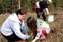 Vysazování nových stromků v Sudicích.