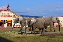 Do Boskovic přijede legendární Cirkus Humberto.