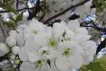 Procházka kvetoucím jarním centrem Blanska.
