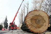 Dřevorubci kácí stromy v boskovické ulici Otakara Kubína.