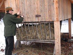 Lesníci v zimě zvěři přilepšují senem, vojtěškovými granulemi, ovsem, řepou i kaštany.