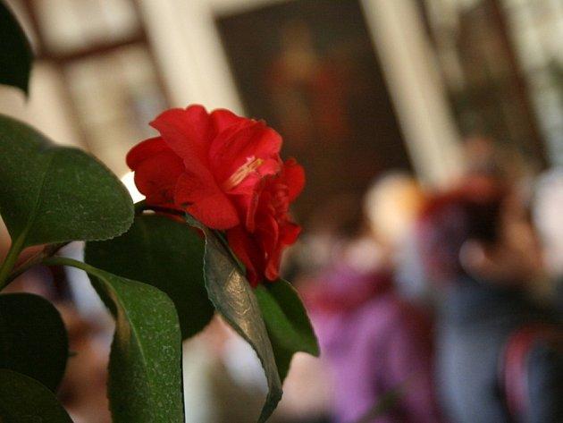 Prostory zámku v Rájci-Jestřebí zaplnila v těchto dnech tradiční výstava kamélií.