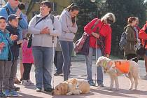 V Blansku se v pátek uskutečnil dvanáctý ročník soutěže pro nevidomé a vodicí psy Cesta ve tmě.