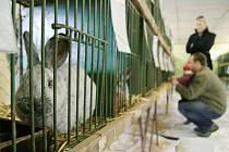 Ráječtí chovatelé pořádali o víkendu prodejní výstavu králíků.