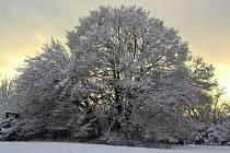 Krásy zimy u Ostrova u Macochy. Foto: Pavel Kuchař