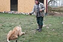 David Čech propadl od mládí chovu zvířat. Na zahradě v domku na okraji Blanska má dikobrazy, skunky, prasata a psy. Před rokem si pořídil stepního lva.