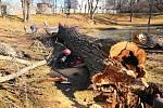 V zámeckém parku v Blansku pokáceli stoletý topol černý.