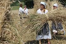 Spolek archaických nadšenců předvedl společně s místními v Horním Smržově ruční sklizeň obilí.