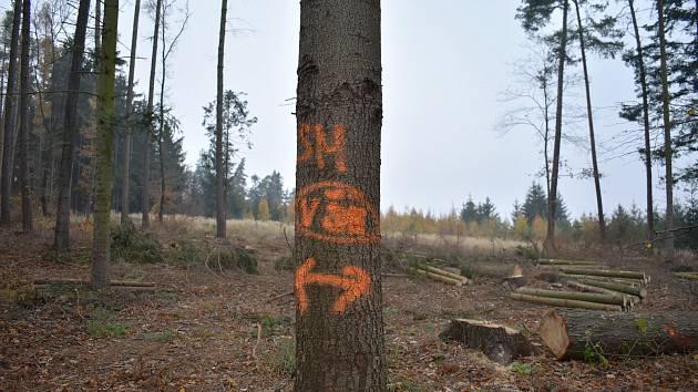 Kvůli kůrovci mizí značení. A také vzácné stromy