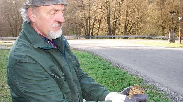 Žáby se sbírají u bariér kolem silnic a přenášejí na druhou stranu.
