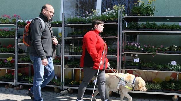 Nevidomí zvládli cestu ve tmě. S vodicími psy.