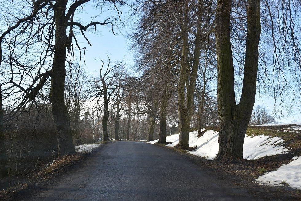 Stromořadí lip ve Svárovské aleji.