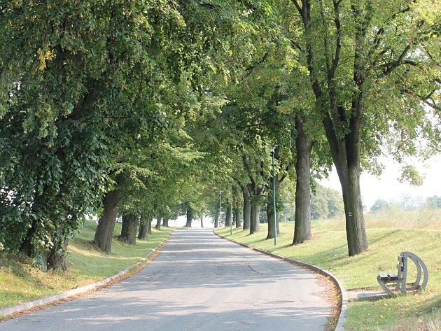 Cestu ke hřbitovu a westernovému městečku v Boskovicích lemuje alej Svatopluka Čecha tvořená hlavně lipami. V roce 1908 ji založil Okrašlovací spolek města Boskovice.