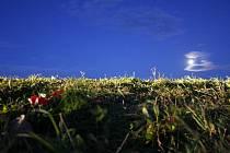 Na poli mezi Ústupem na Blanensku třiatřicetiletého otce čtyř dětí zbili tak, že muž vdechl zvratky s krví a udusil se. Na místě nyní leží květiny