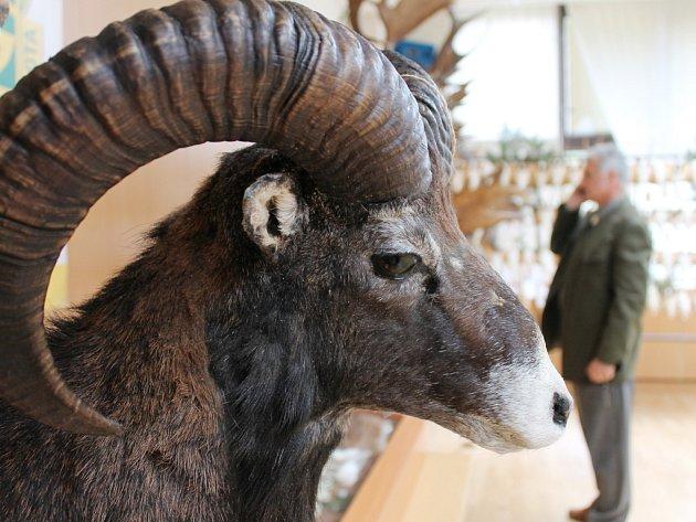 Přehlídka trofejí je k vidění na chovatelské přehlídce blanenských myslivců.