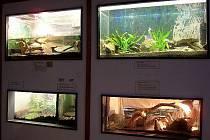 Boskovičtí studenti chovají s kantory ve škole hada, ještěra, sklípkana, rybičky a nejrůznější tropické tvory.Pracují pod klubem  Biosféra a mohou se pyšnit jedenácti plnými akvárii a terárii.