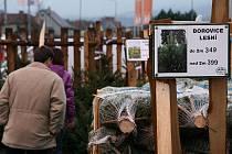 Prodej vánočních stromků v Blansku.