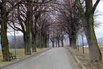 V Boskovicích před sto lety tamní okrašlovací spolek vysadil alej asi sto devadesáti lip v ulici Svatopluka Čecha, která vede ke hřbitovu a westernovému městečku.