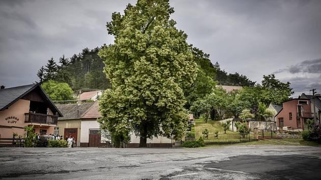 Velkoopatovická lípa svobody, takzvaná Zádvorská lepa, se s dalšími čtrnácti stromy z různých zemí utká o titul Evropský strom roku 2019.