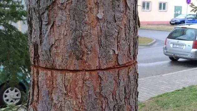Vandal nařízl zdravý strom v blanenské ulici Cihlářská.