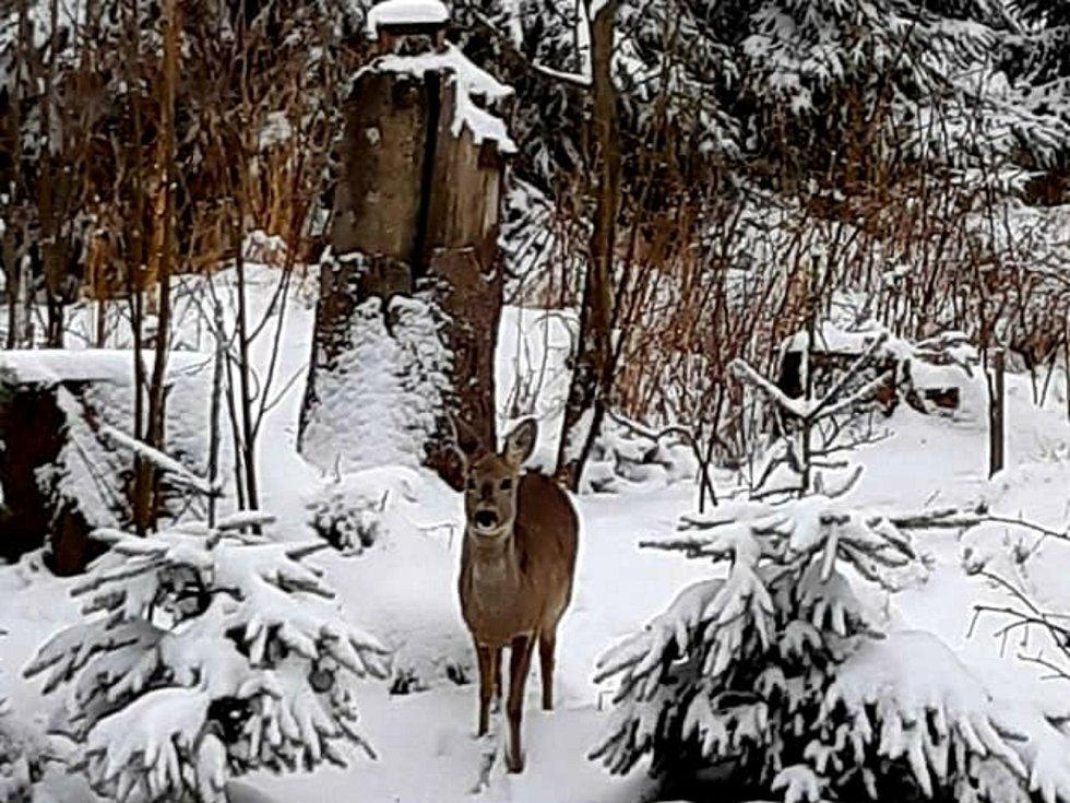 Nasněžilo i mezi Velenovem a Suchým.